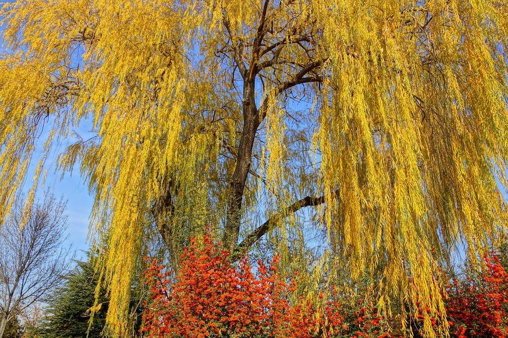 ankara bahçelievler ağaçlar