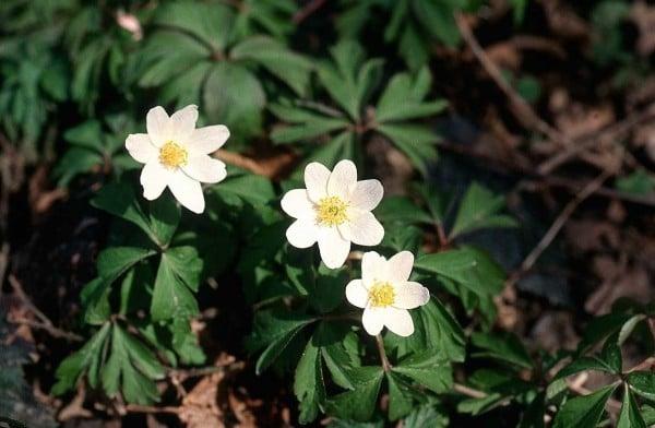 Beyaz çiçekler ve bilgiler