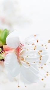 beyaz çiçek 1080x1920
