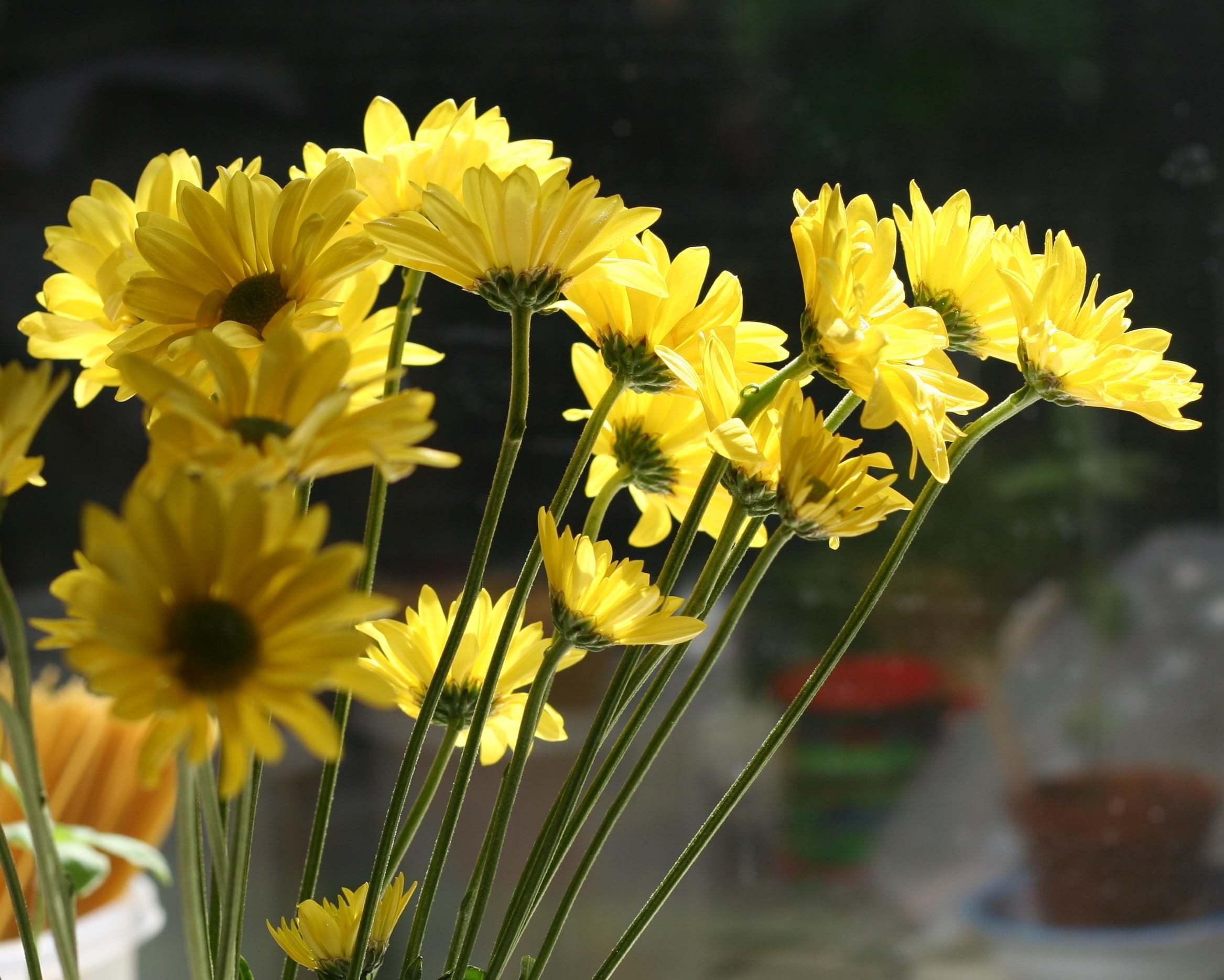 Çiçekler – 104