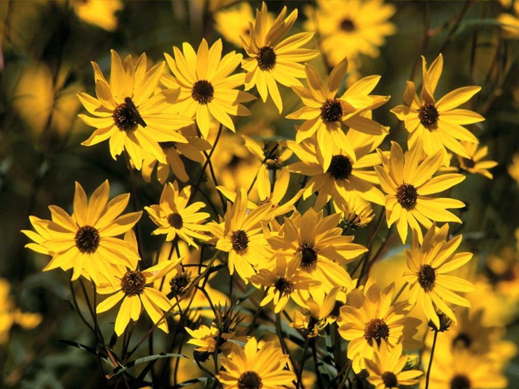 Çiçekler – 105