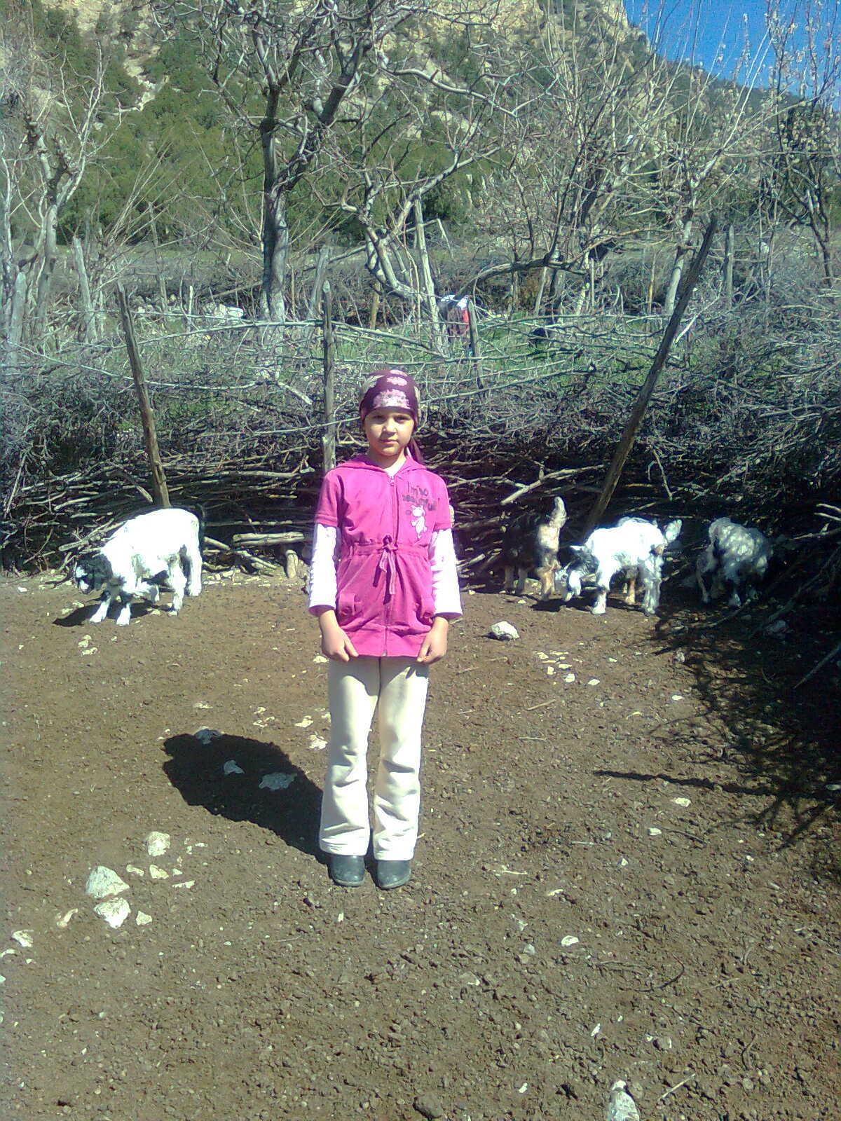 bolu göynük soğukçam köyü keçi yavruları ağılda