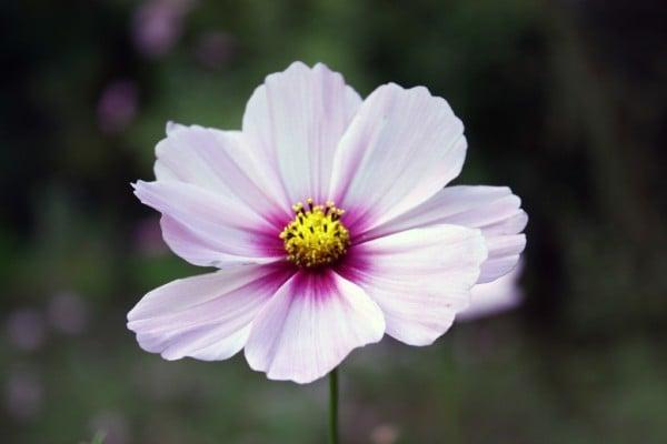 bordo beyaz çiçek