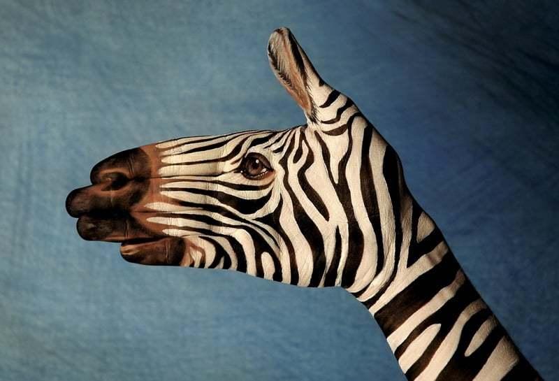 Boyanmış Eller / Zebra