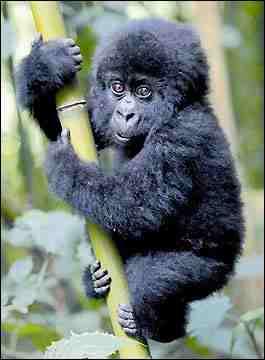 bu maymunu istiyorum
