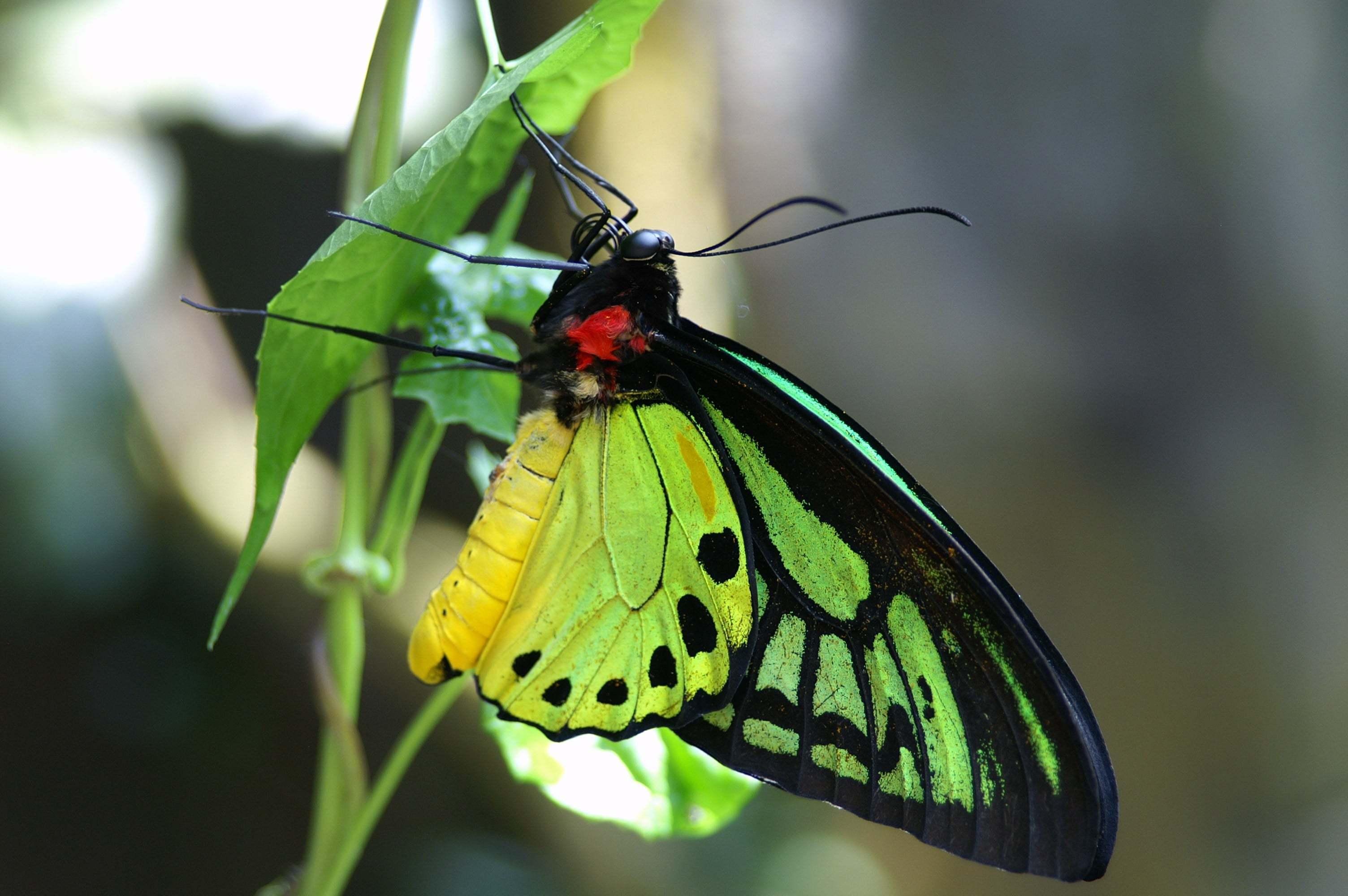 Yakın Çekim Kelebek Resmi