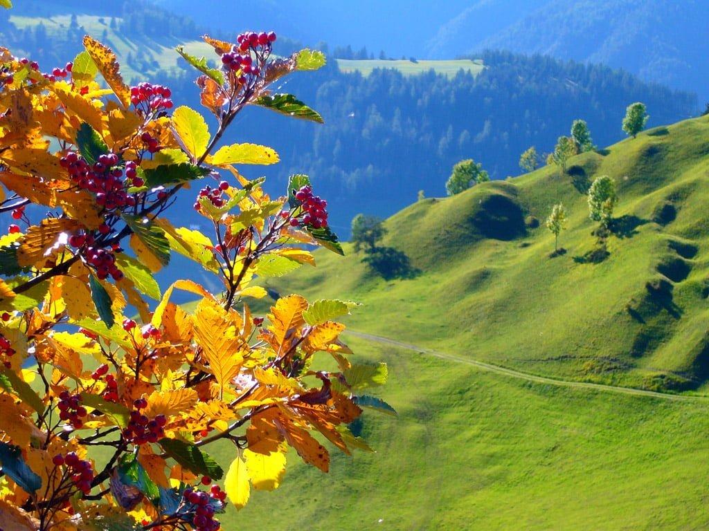 Çiçek manzaraları-1