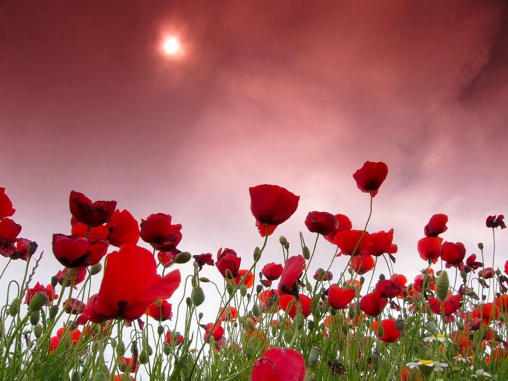 Kırmızı Tonlu Gün Batımı