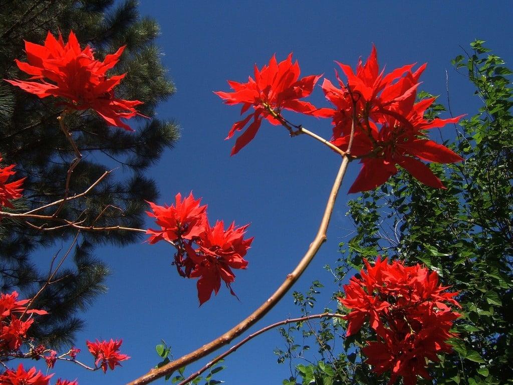 Kırmızı Çiçekler ve Gökyüzü