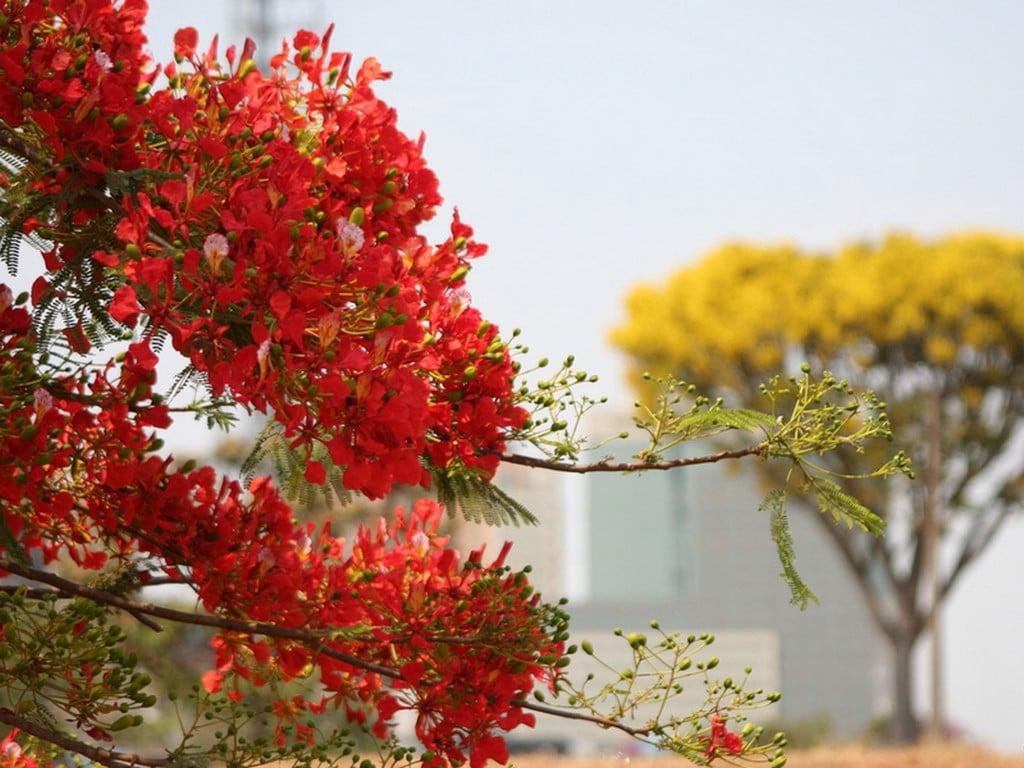 Sarı ve Kırmızı Çiçekler