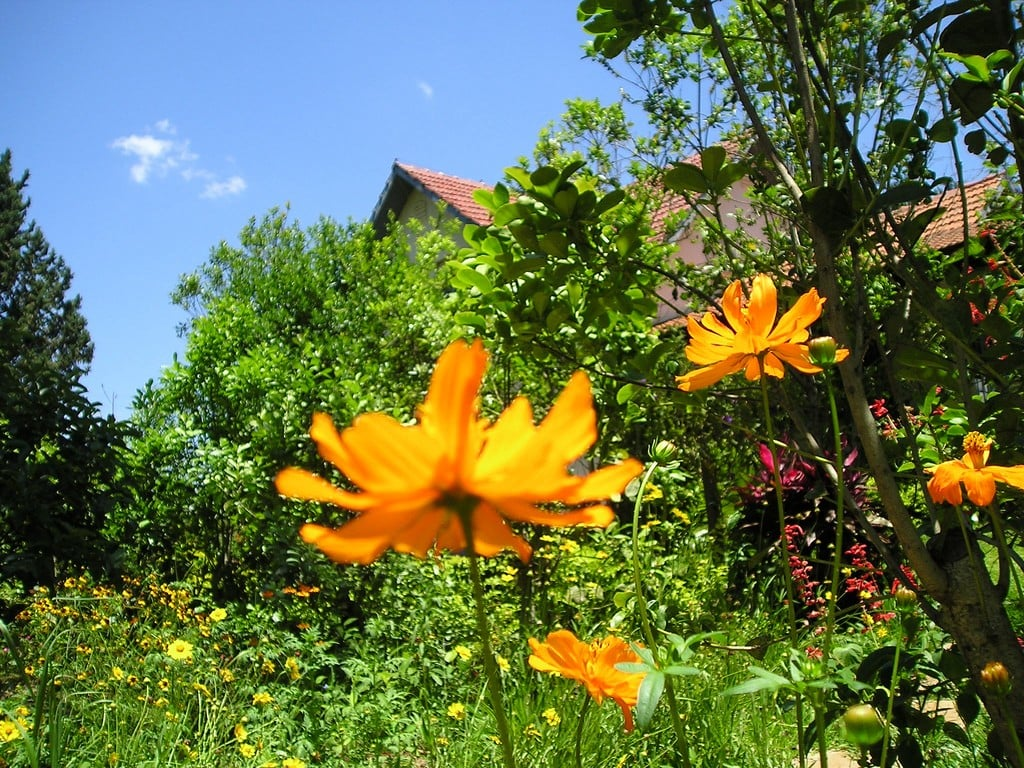 Yeşillikler İçindeki Sarı Çiçekler