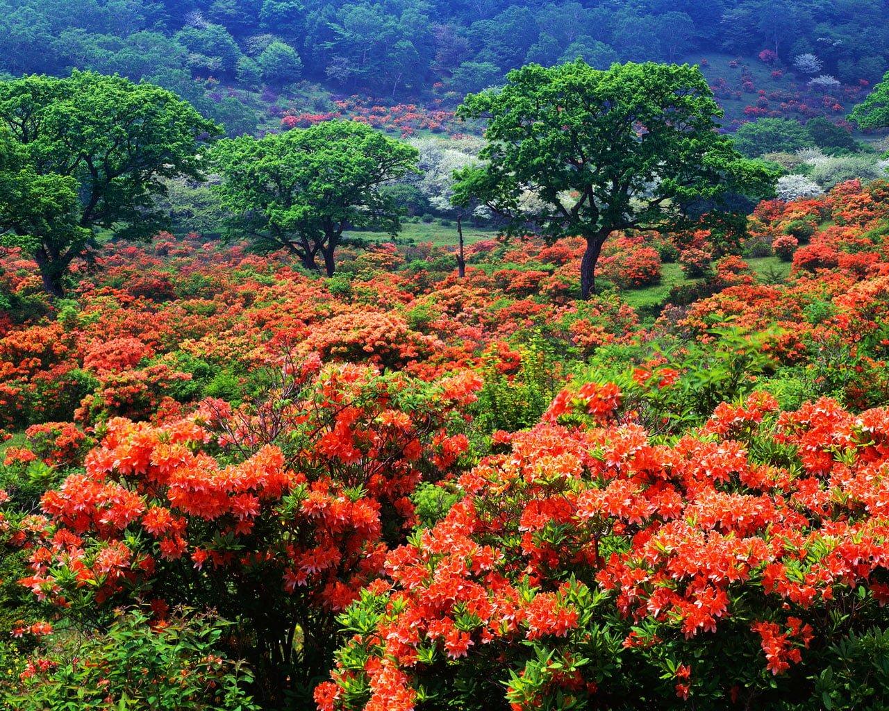 Çiçek manzarası