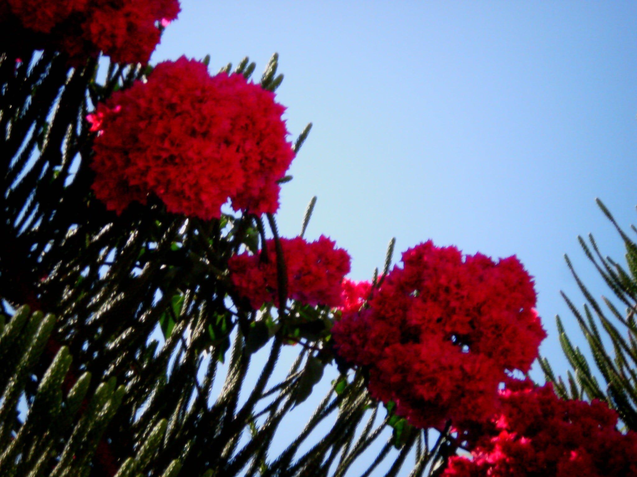 Çiçekler ve gökyüzü-64
