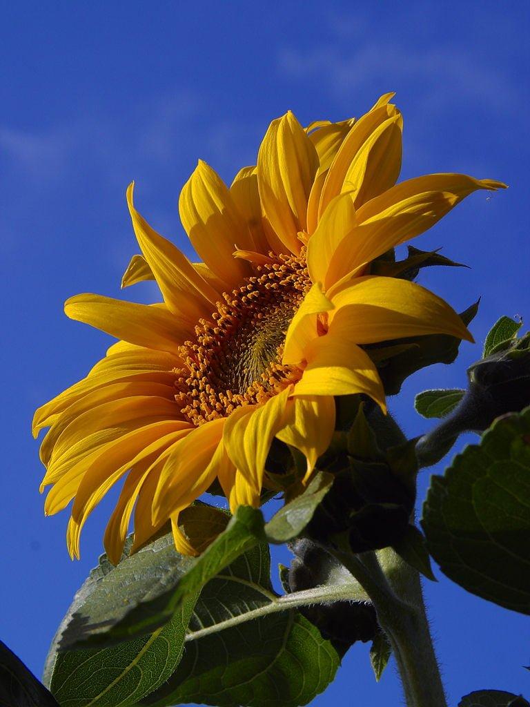 Çiçekler ve gökyüzü-68