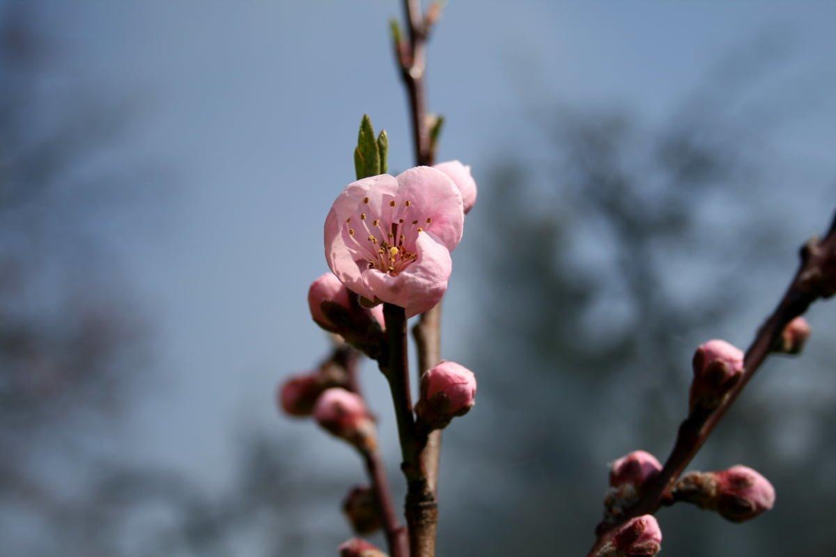 Çiçekler ve gökyüzü-70