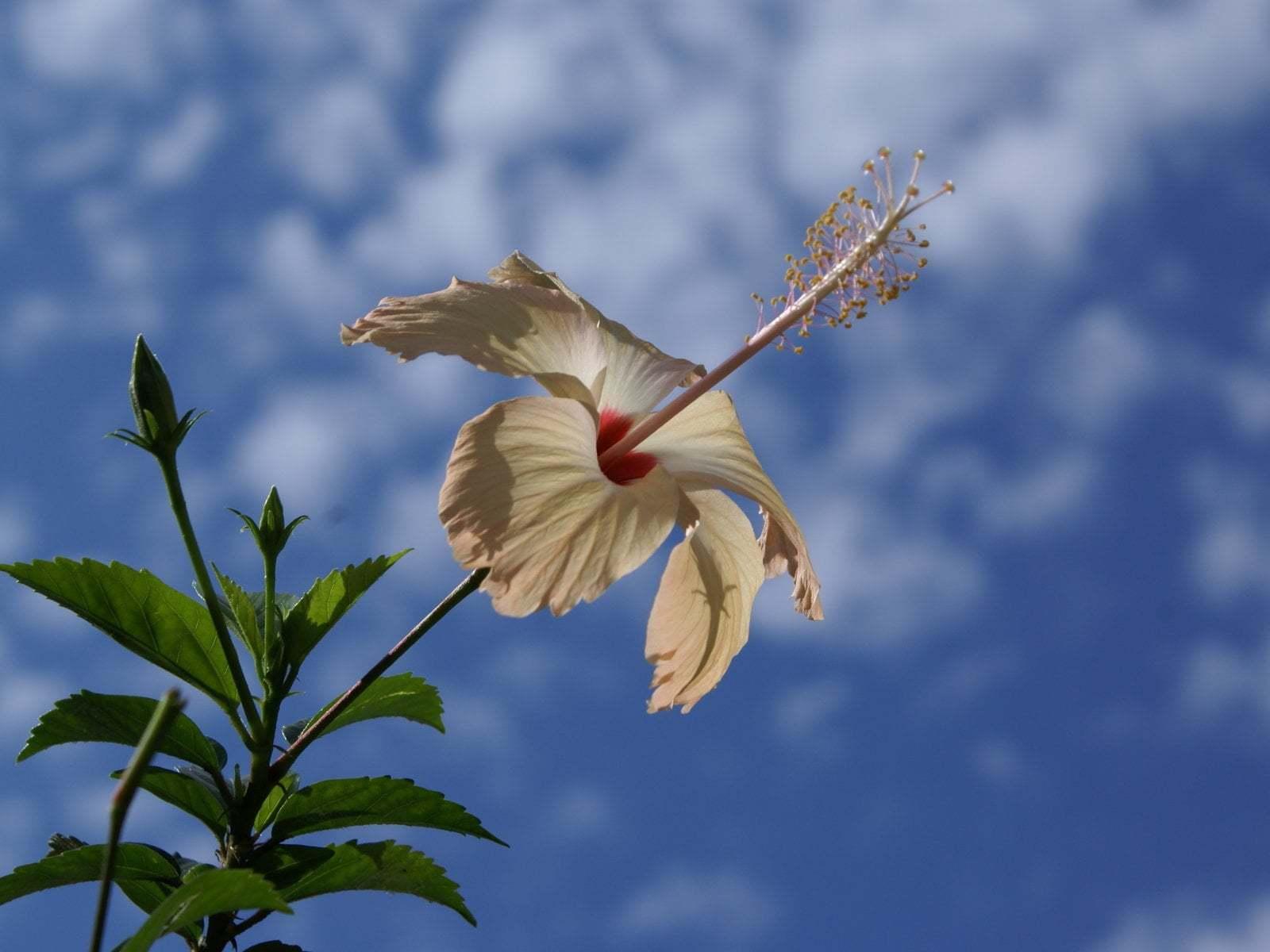 Çiçekler ve gökyüzü-72