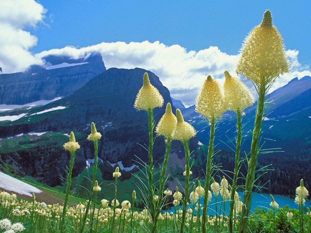 Çiçekler ve gökyüzü-73