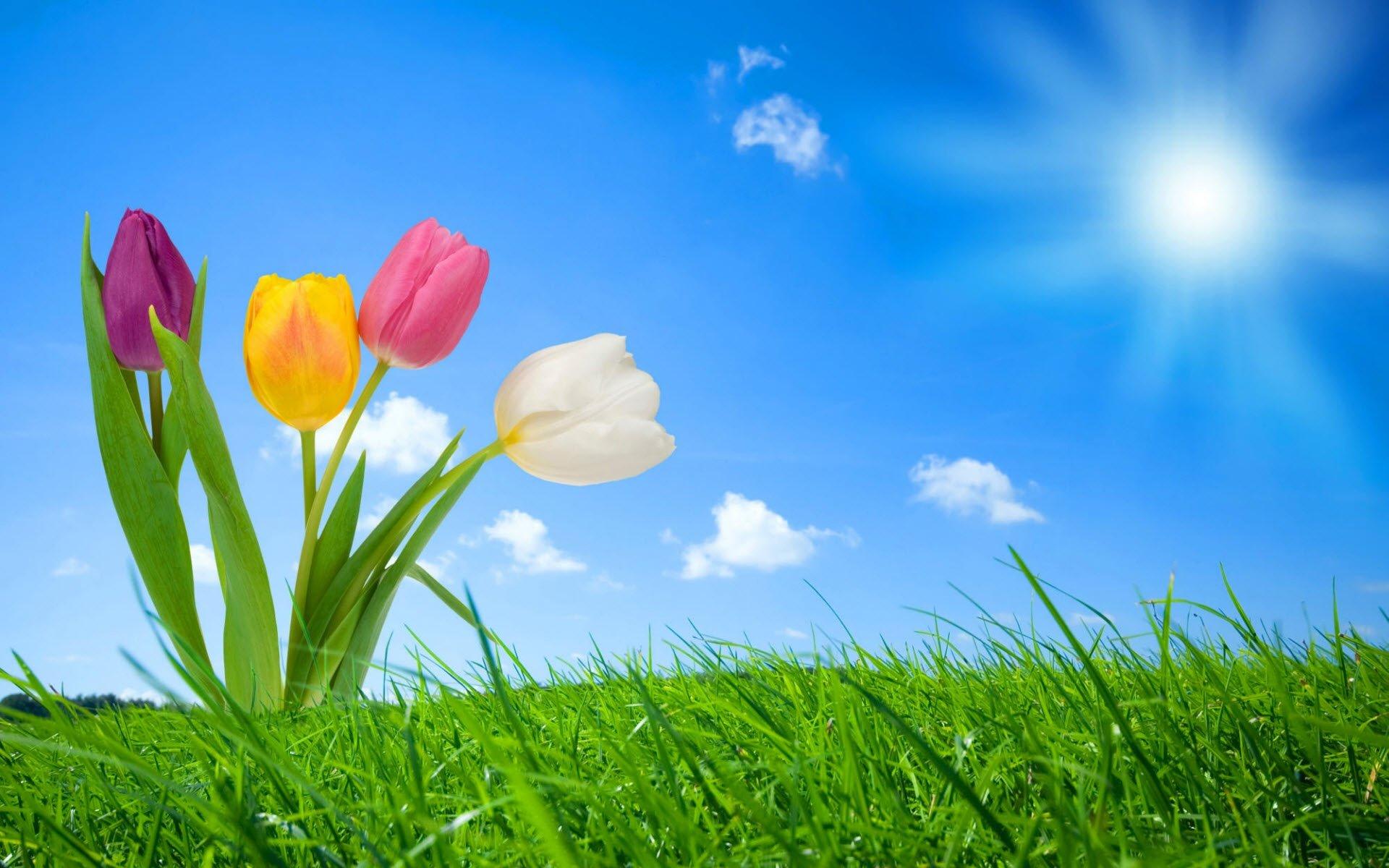 Çiçekler ve gökyüzü-74