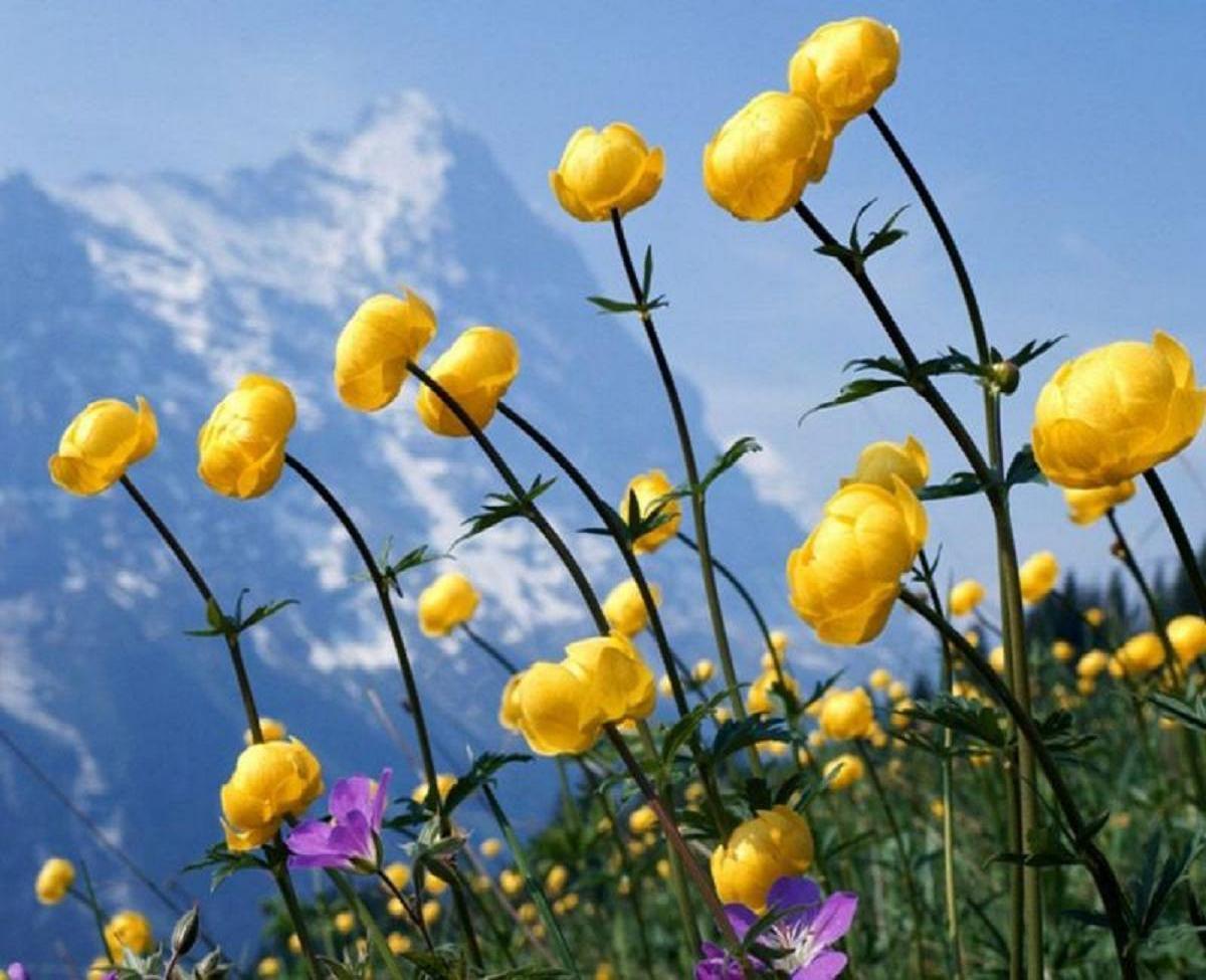 Çiçekler ve gökyüzü-75