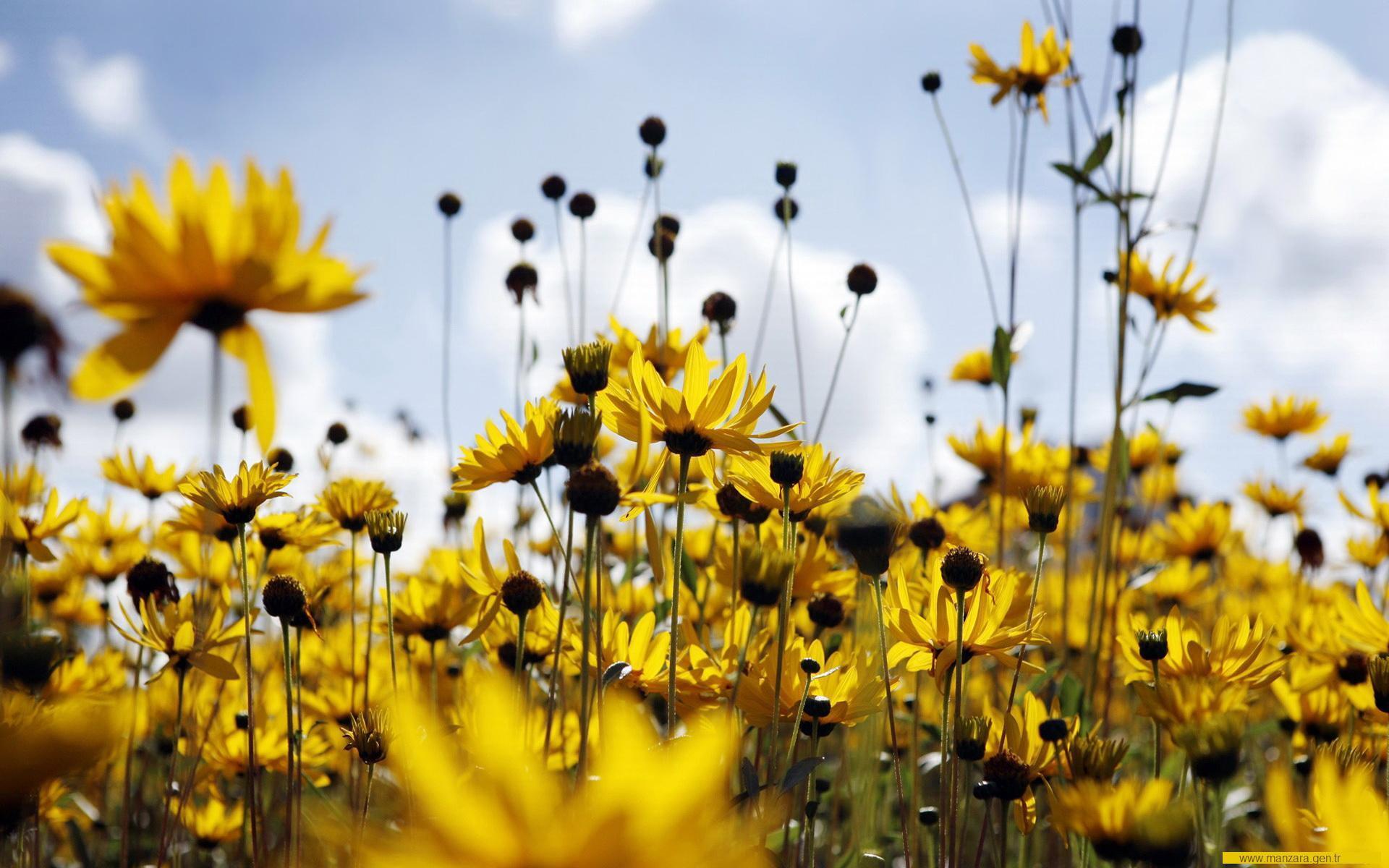 Çiçekler ve gökyüzü-76