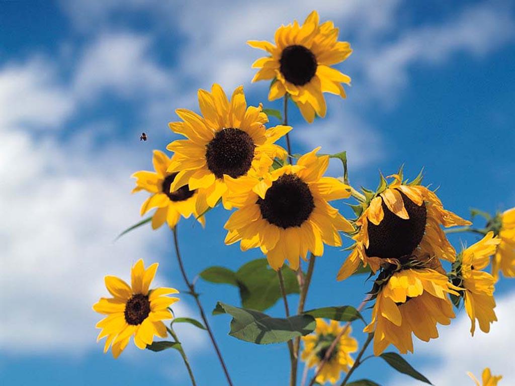 Çiçekler ve gökyüzü-77