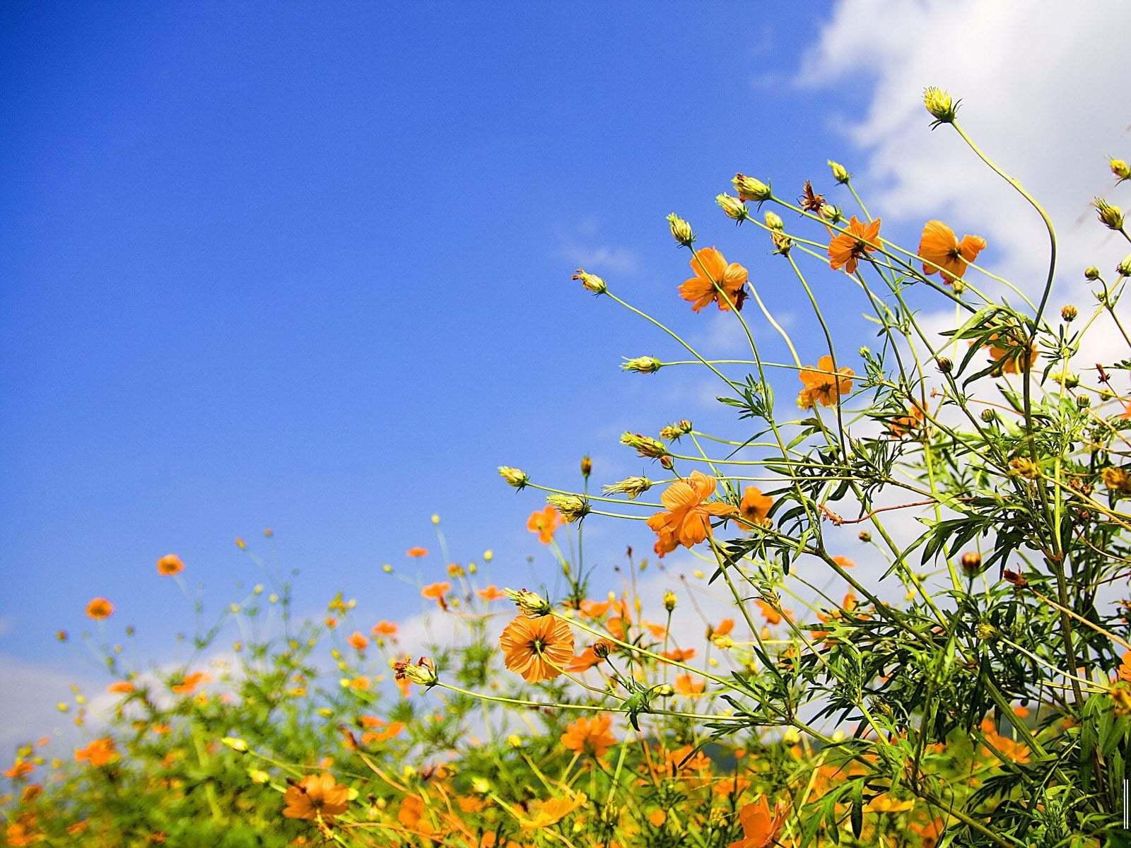 Çiçekler ve gökyüzü-78