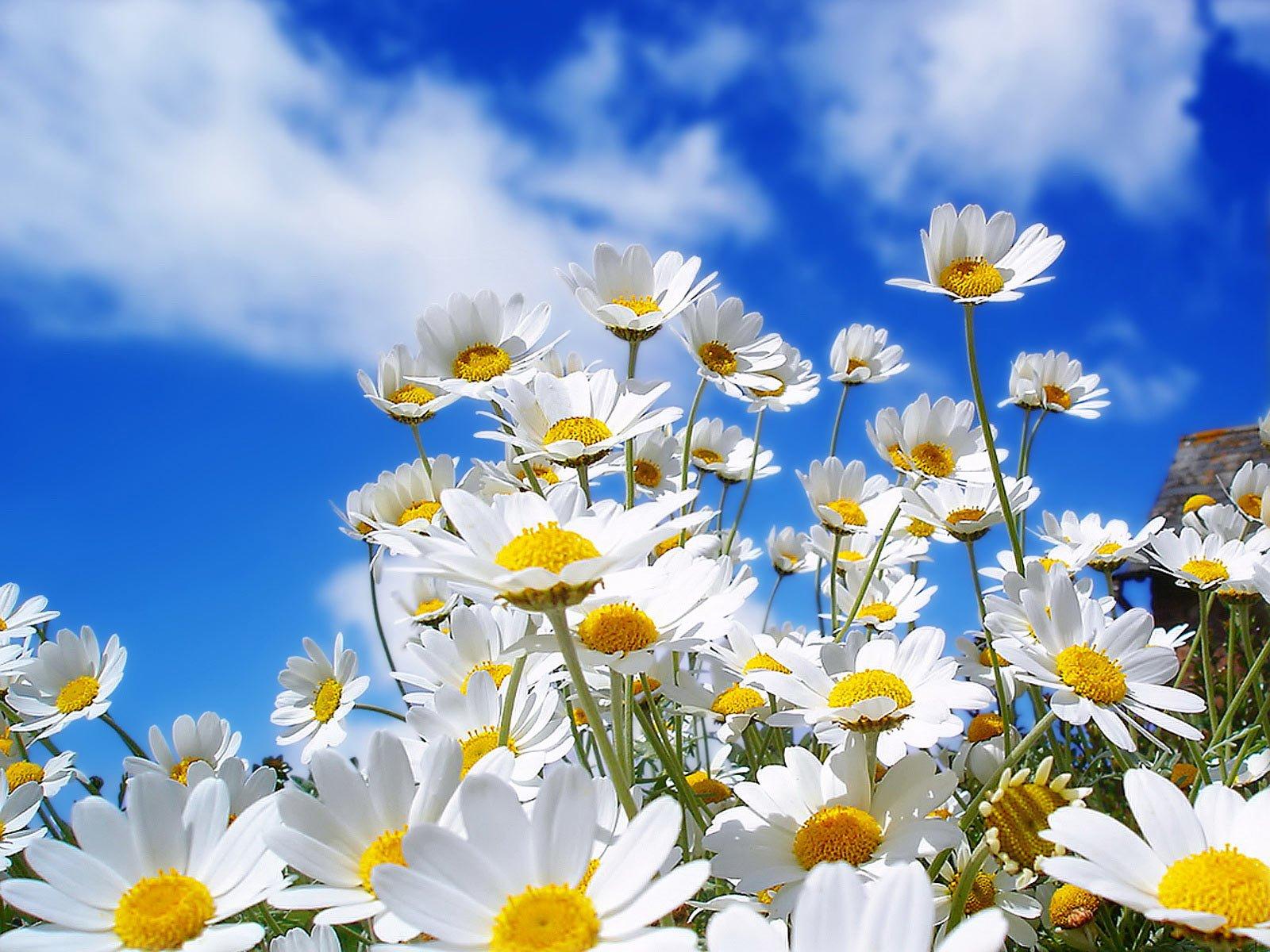 Çiçekler ve gökyüzü-79