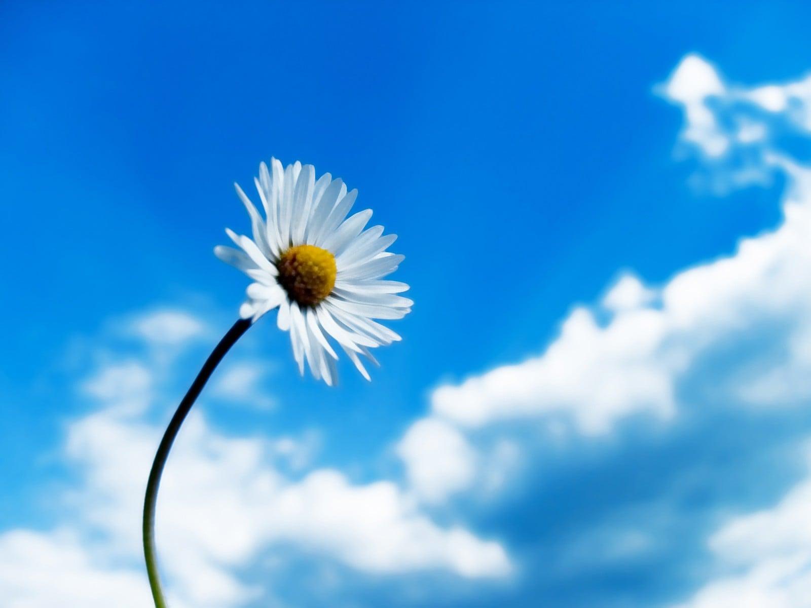 Çiçekler ve gökyüzü-80