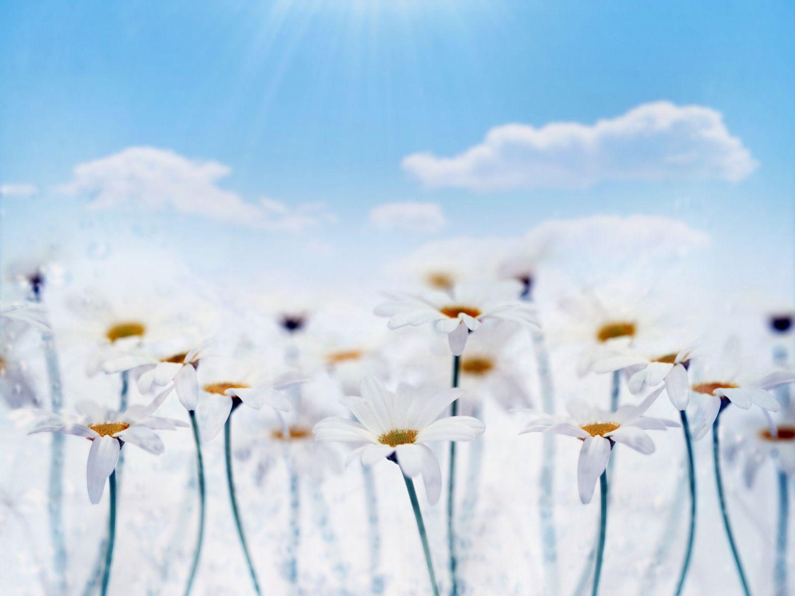 Çiçekler ve gökyüzü-81