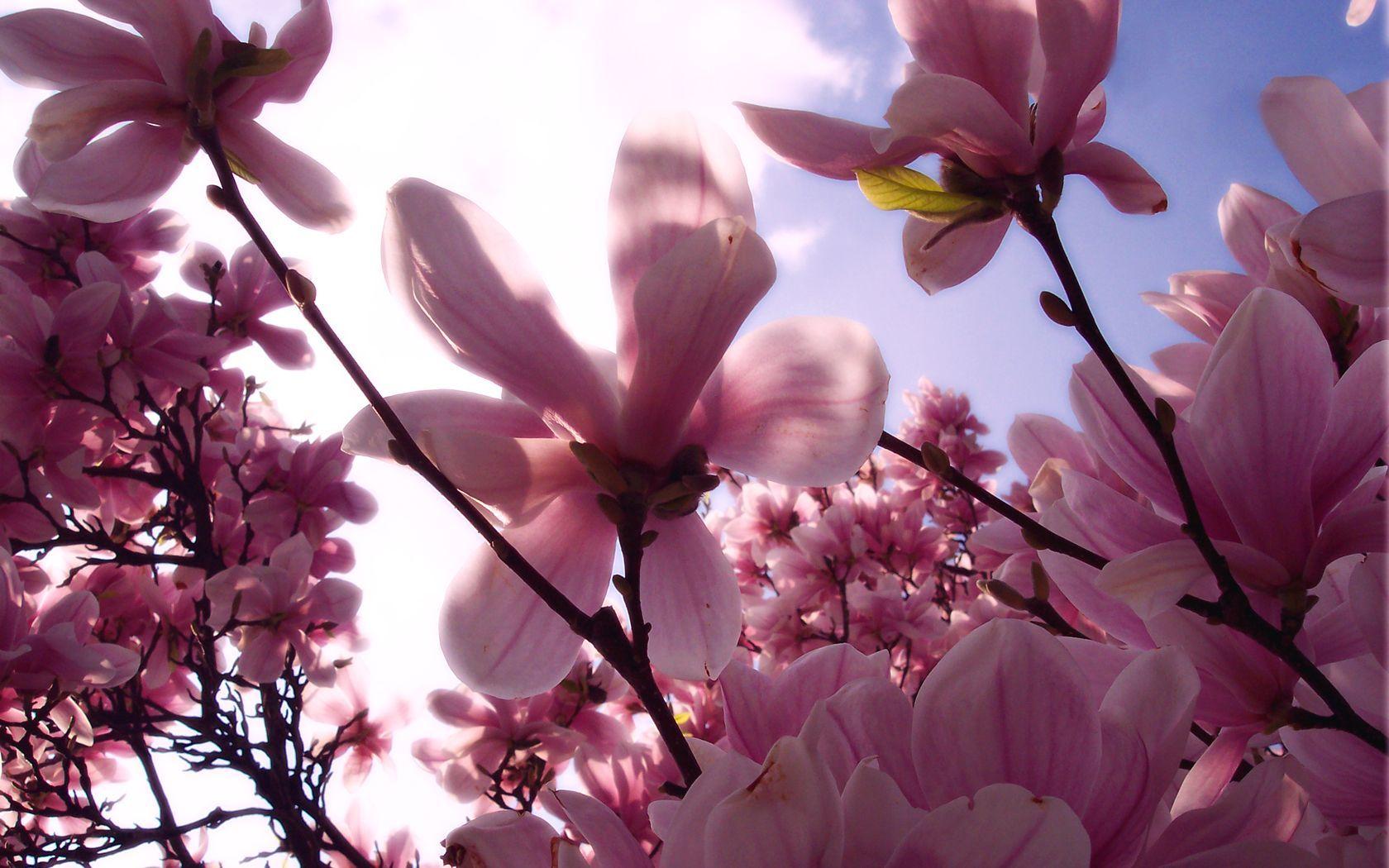 Çiçekler ve gökyüzü-82