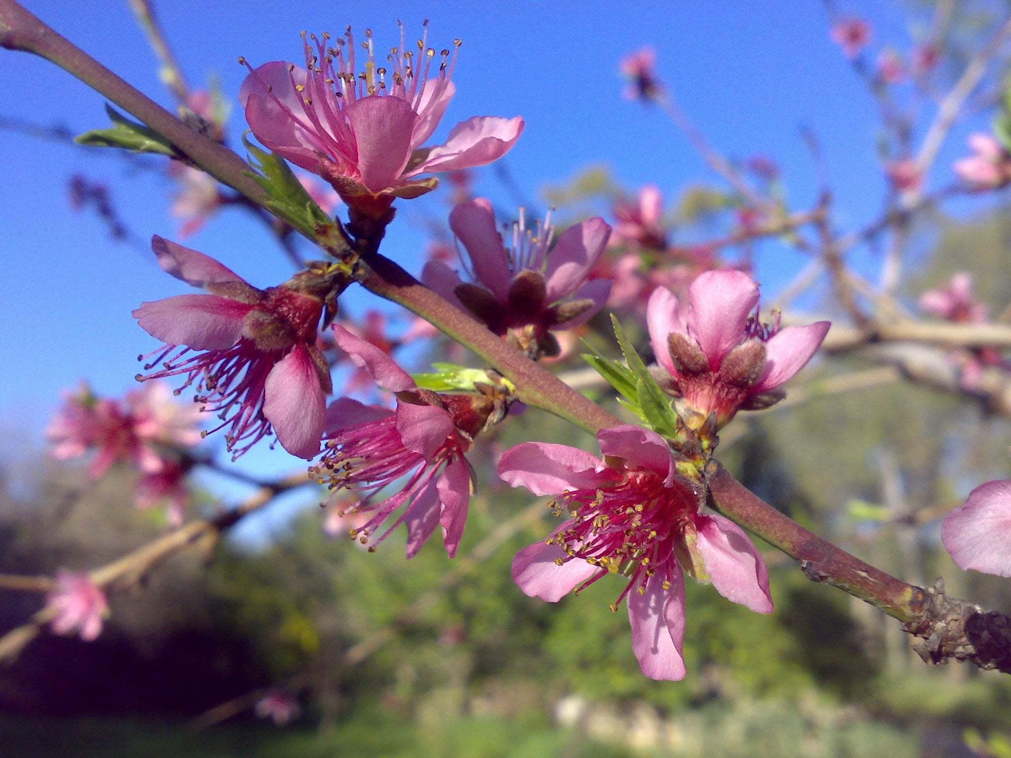 Çiçekler ve gökyüzü-83