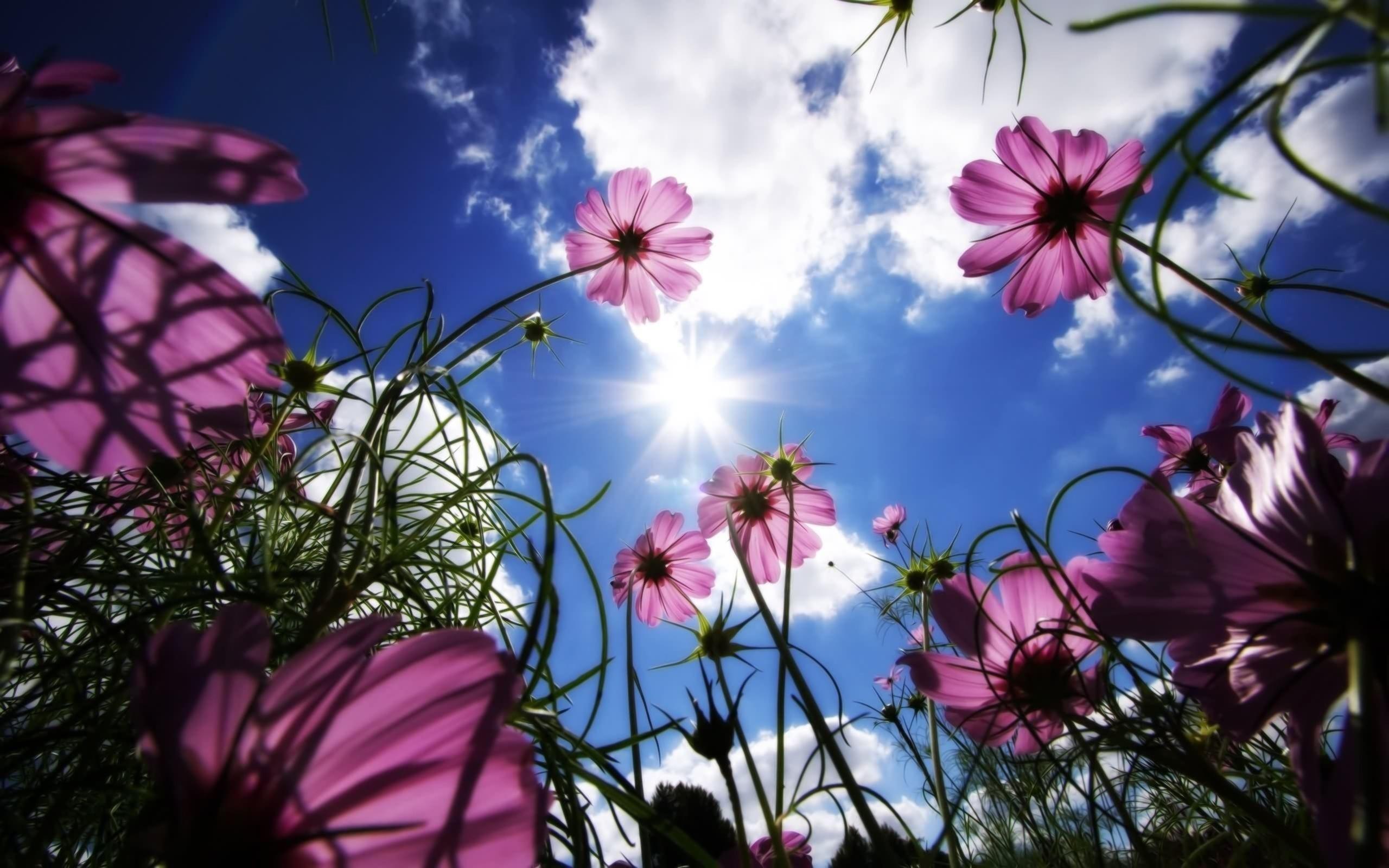 Çiçekler ve gökyüzü-84