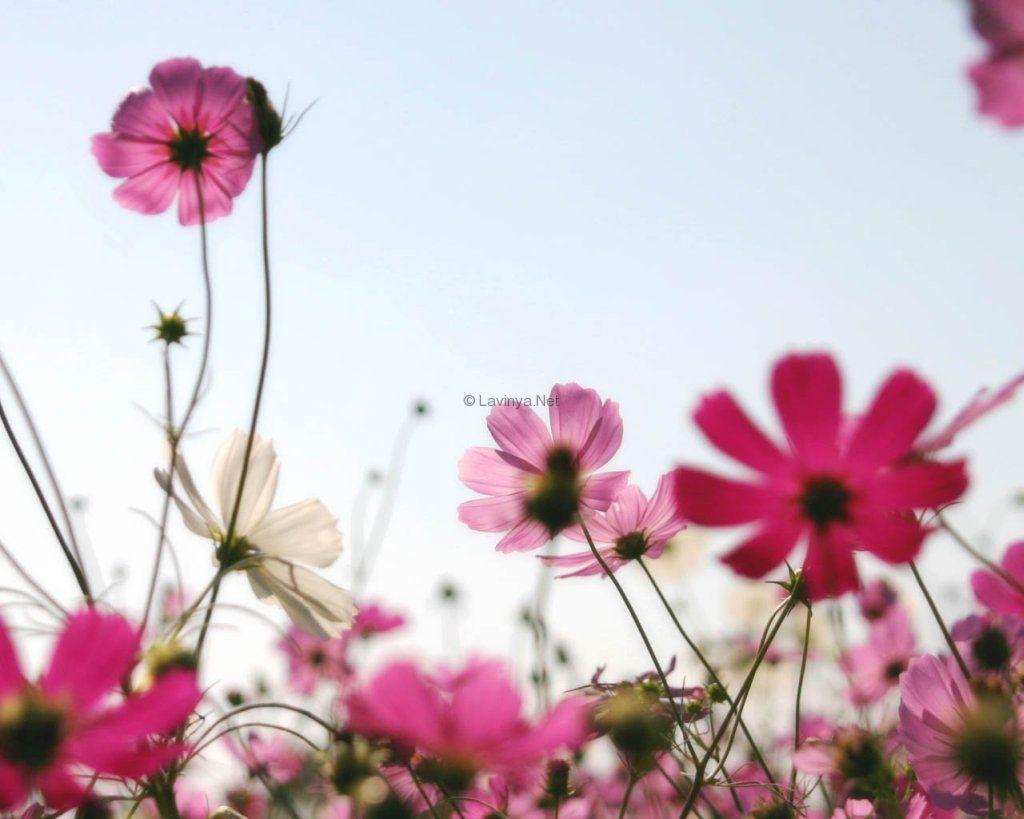 Çiçekler ve gökyüzü-85