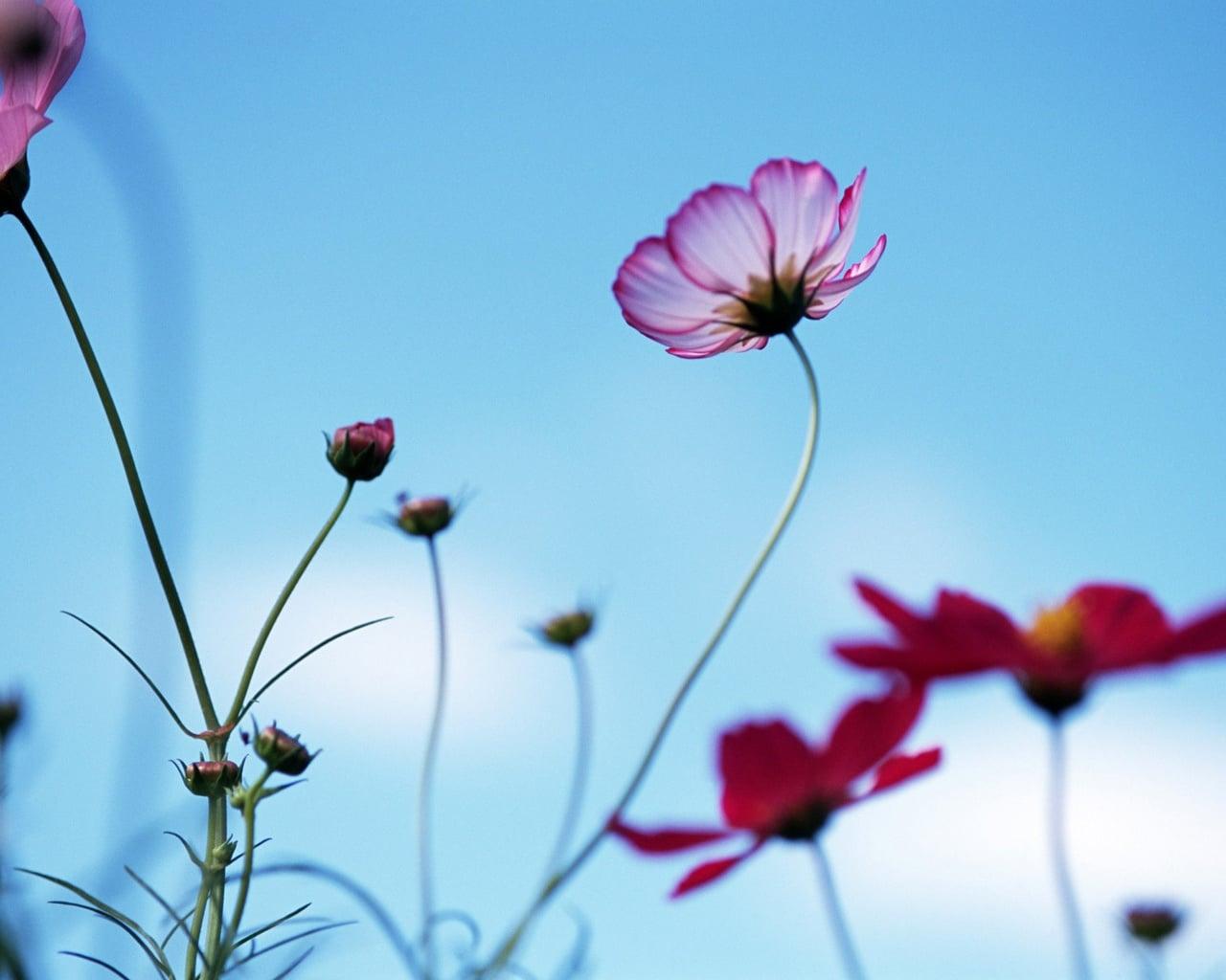 Çiçekler ve gökyüzü-86