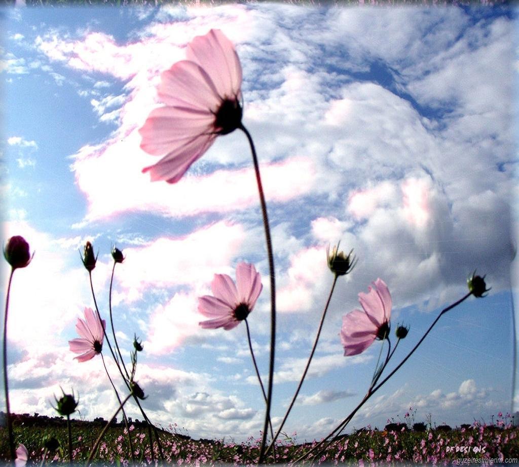Çiçekler ve gökyüzü-87