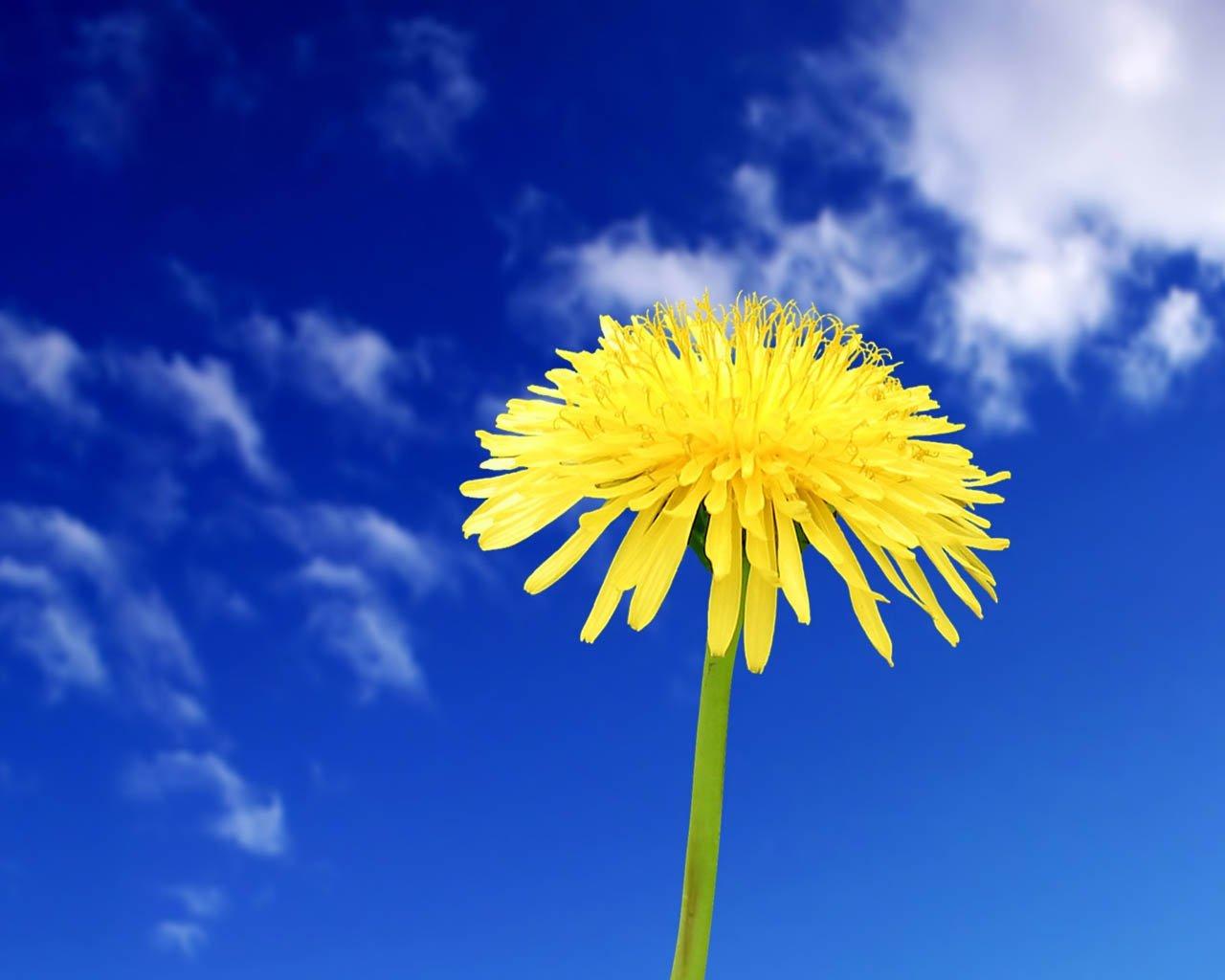 Çiçekler ve gökyüzü-88