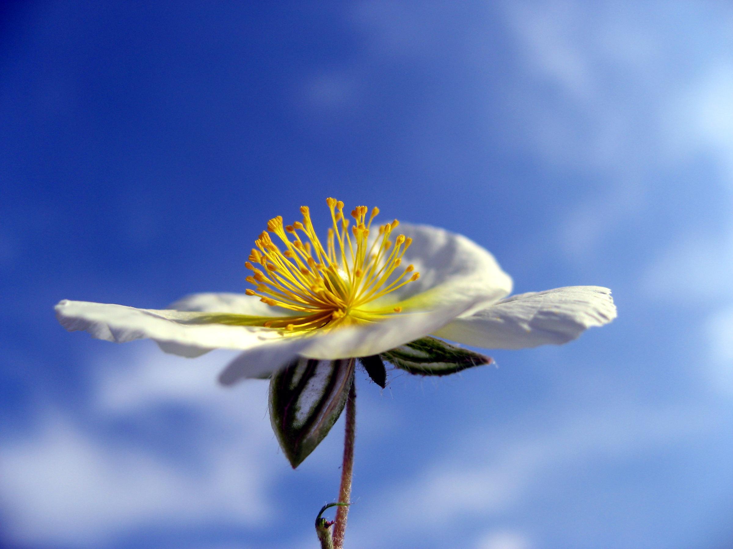 Çiçekler ve gökyüzü-89