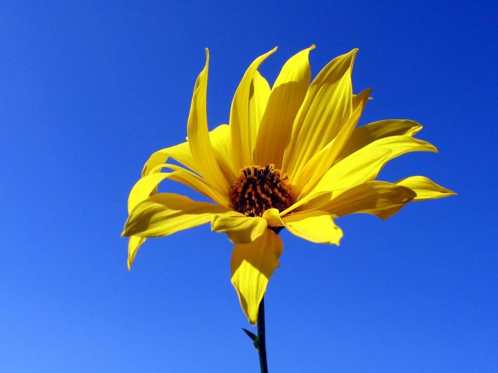 Çiçekler ve gökyüzü-90