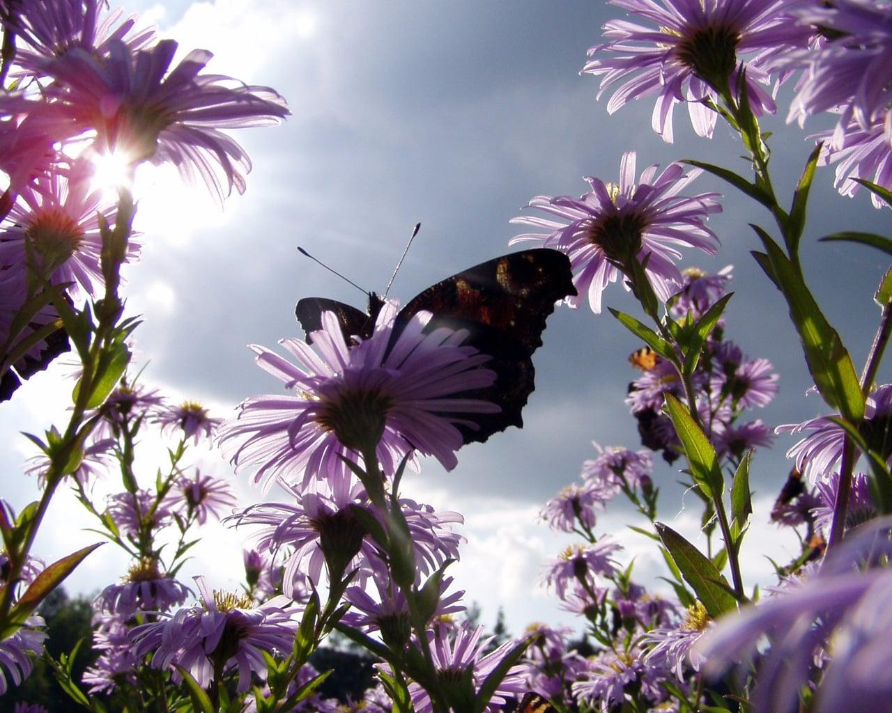Çiçekler ve gökyüzü-94