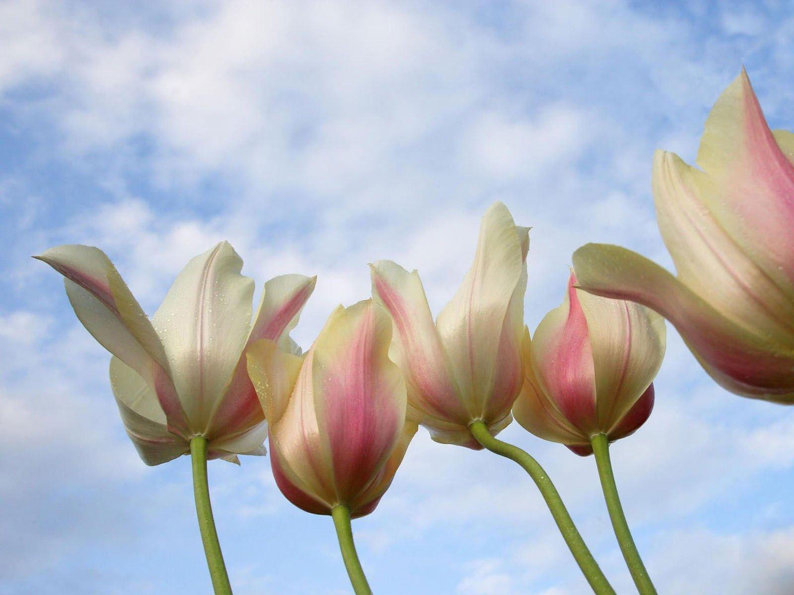 Çiçekler ve gökyüzü-95