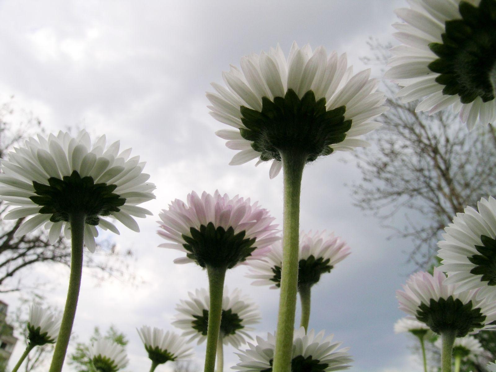 Çiçekler ve gökyüzü-96
