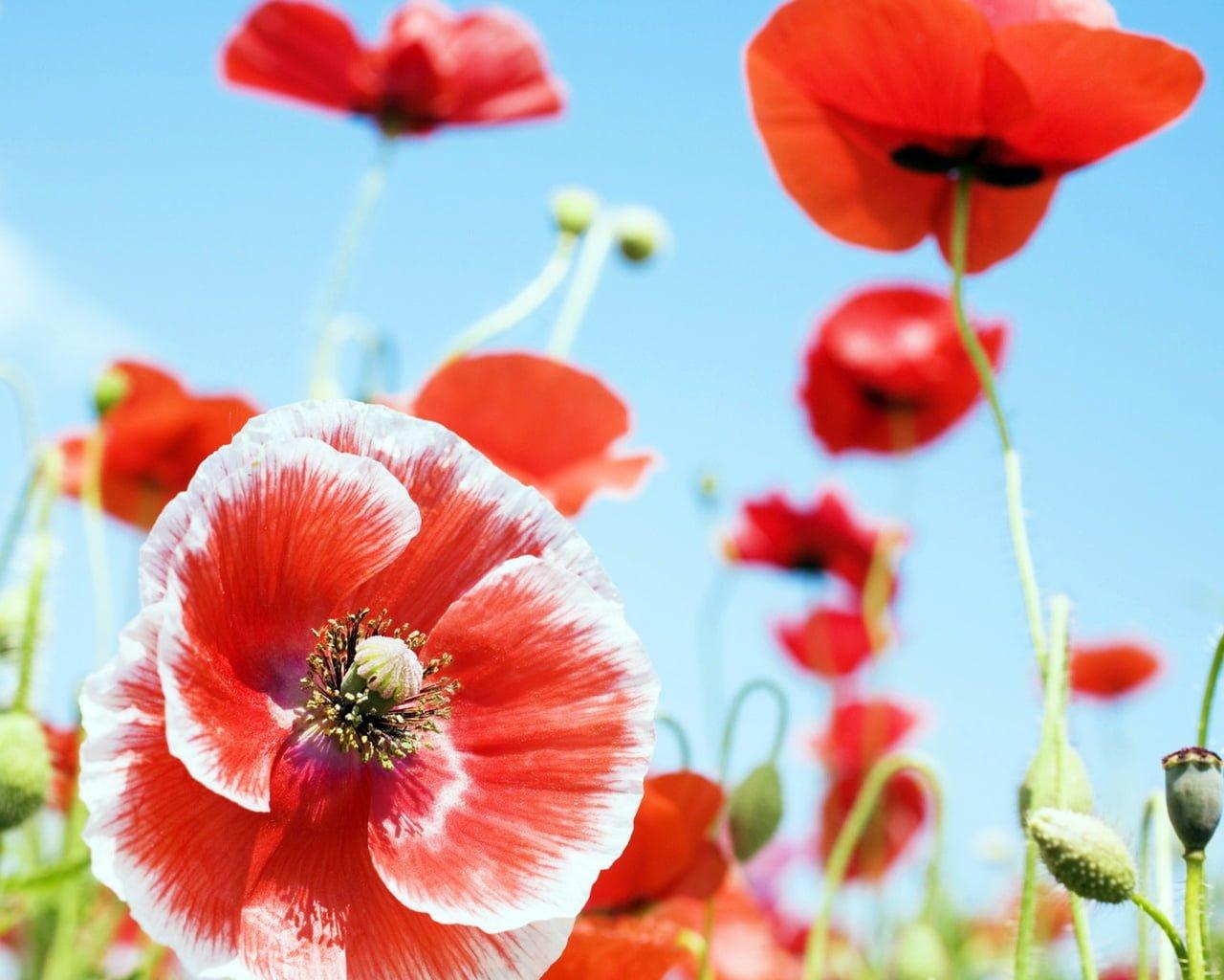 Çiçekler ve gökyüzü-97