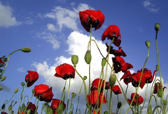 Çiçekler ve gökyüzü-98