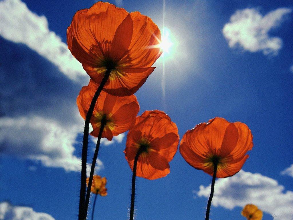 Çiçekler ve gökyüzü-99