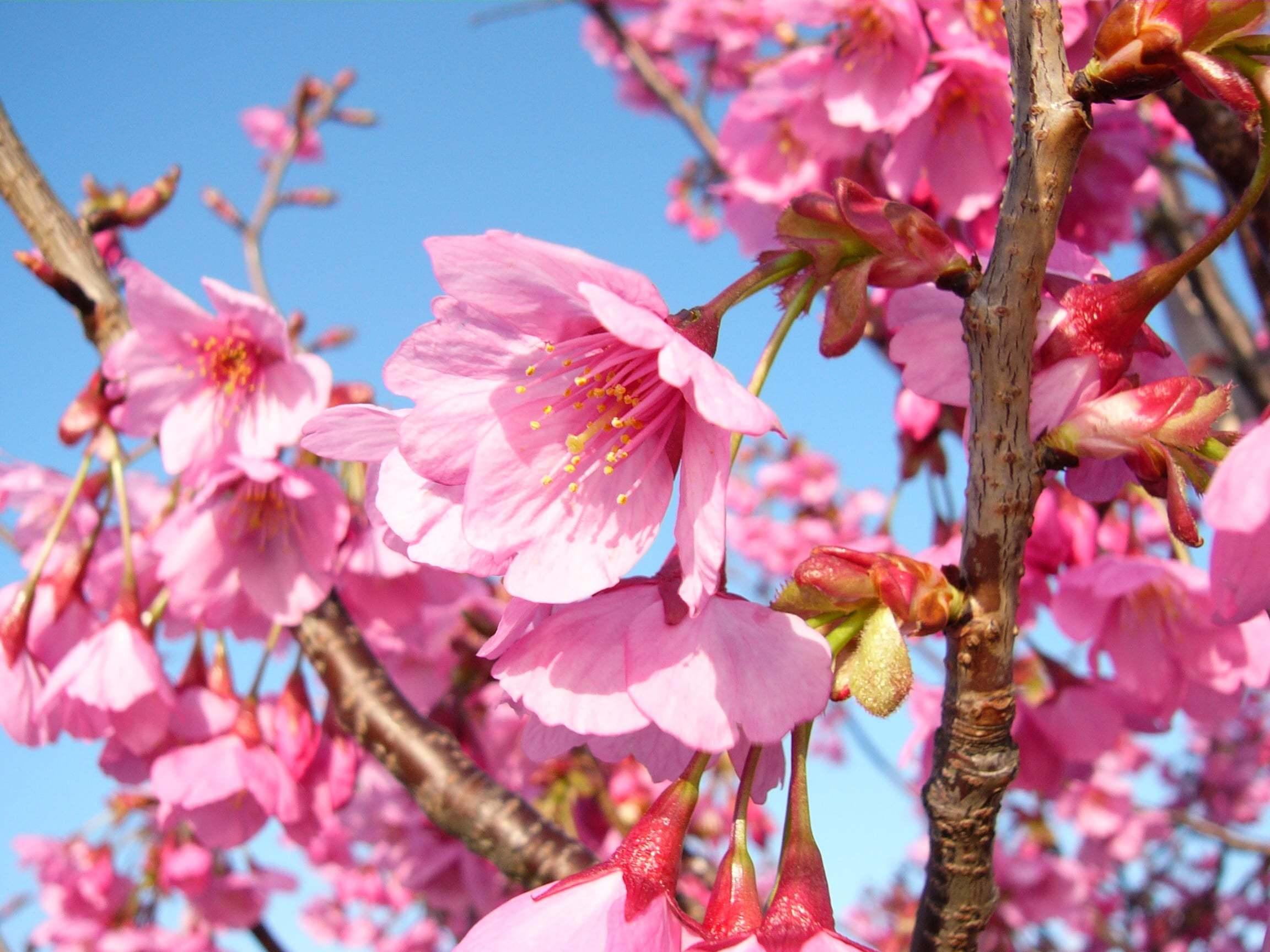 Çiçekler ve gökyüzü-91