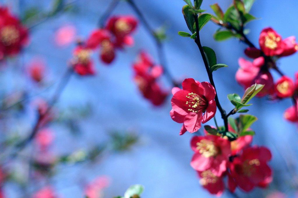 Çiçekler ve gökyüzü-92