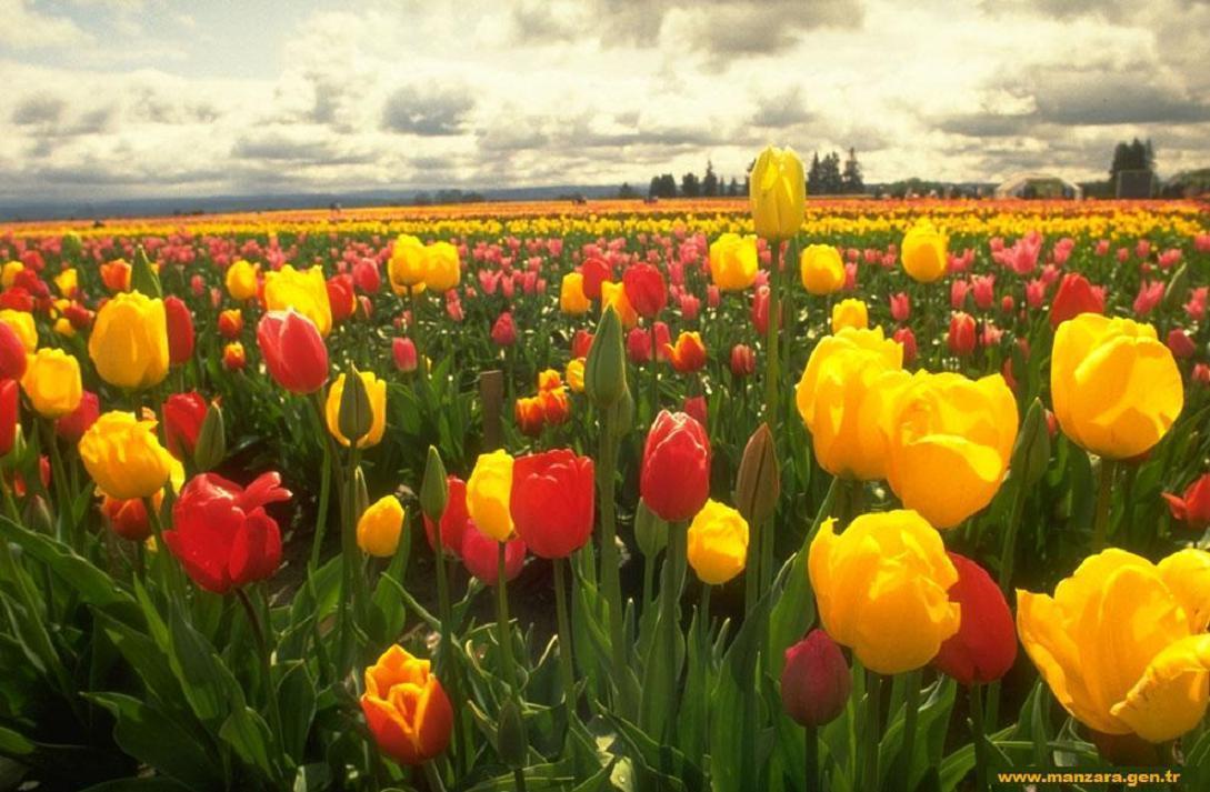 Çiçekli manzaralar-1