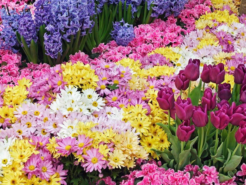 Çiçekli manzaralar-11