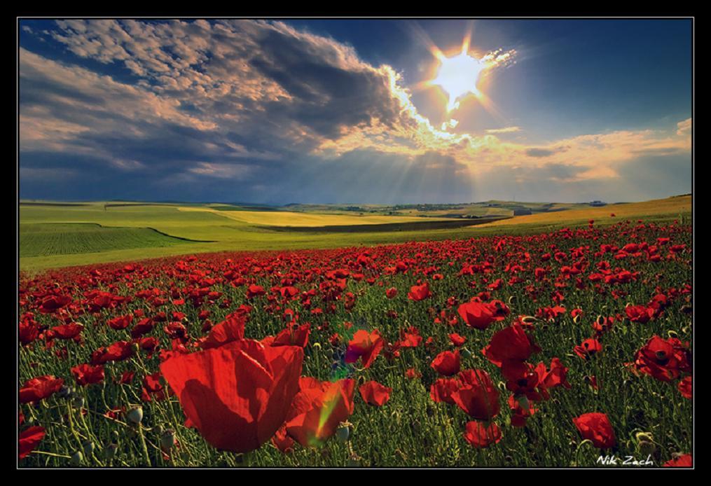 Çiçekli manzaralar-2