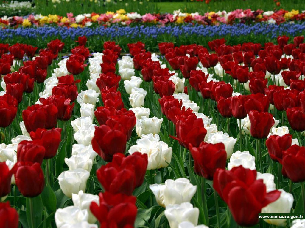 Çiçekli manzaralar-21